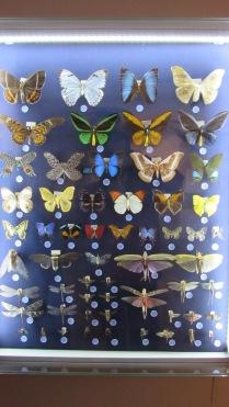 Doğa Müzesi'nde kelebek koleksiyonu.