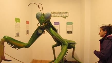 Doğa Müzesi'nde bir Peygamber Devesi maketi