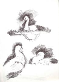 Leylek (White Stork)
