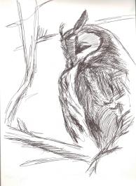 Kulaklı Orman Baykuşu (Long-eared Owl)