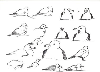 Kumru ve Gümüş Martı (Collared Dove and Yellow-legged Gull)