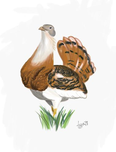 Toy - Great bustard
